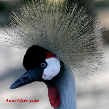 Azuralive: In Parc Phoenix, Nice, Cote d'Azur, France