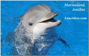 Antibes marineland Dolphin
