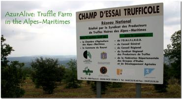 Azuralive: Black truffle farm